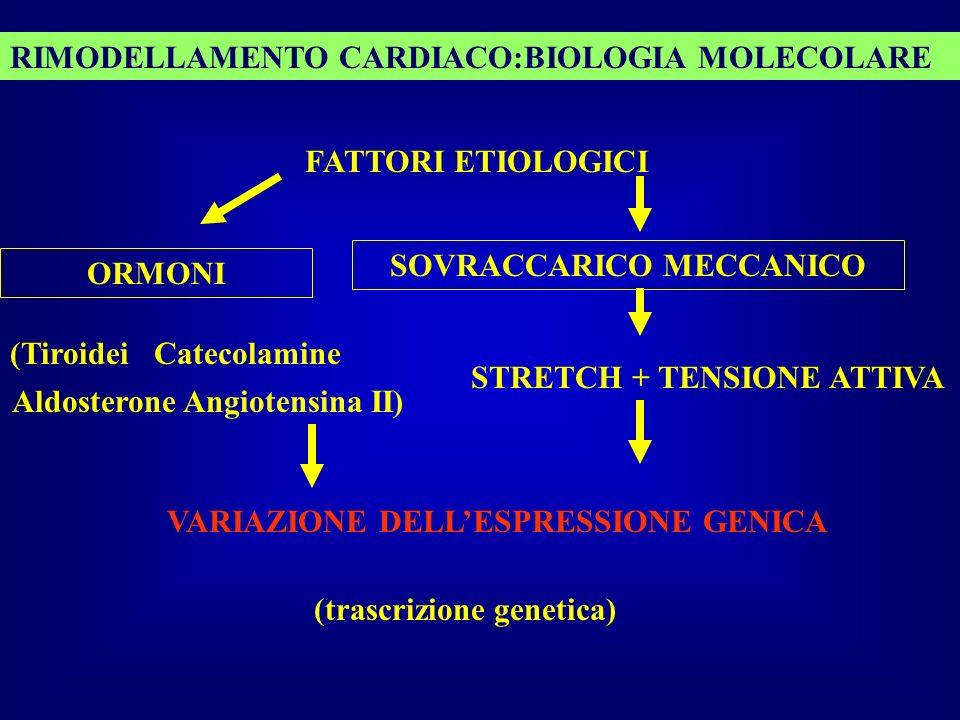 RIMODELLAMENTO CARDIACO:BIOLOGIA MOLECOLARE FATTORI ETIOLOGICI SOVRACCARICO MECCANICO STRETCH + TENSIONE ATTIVA ORMONI (Tiroidei Catecolamine Aldoster