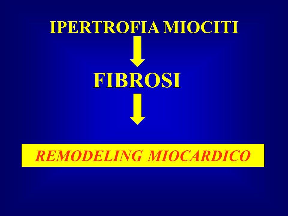 IPERTROFIA MIOCITI FIBROSI REMODELING MIOCARDICO