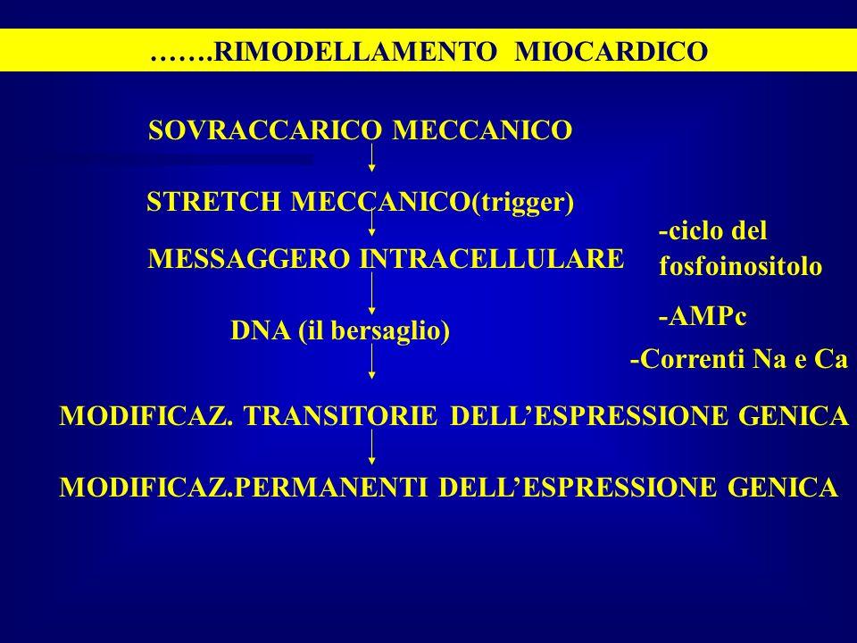…….RIMODELLAMENTO MIOCARDICO SOVRACCARICO MECCANICO STRETCH MECCANICO(trigger) MESSAGGERO INTRACELLULARE -Correnti Na e Ca DNA (il bersaglio) MODIFICA