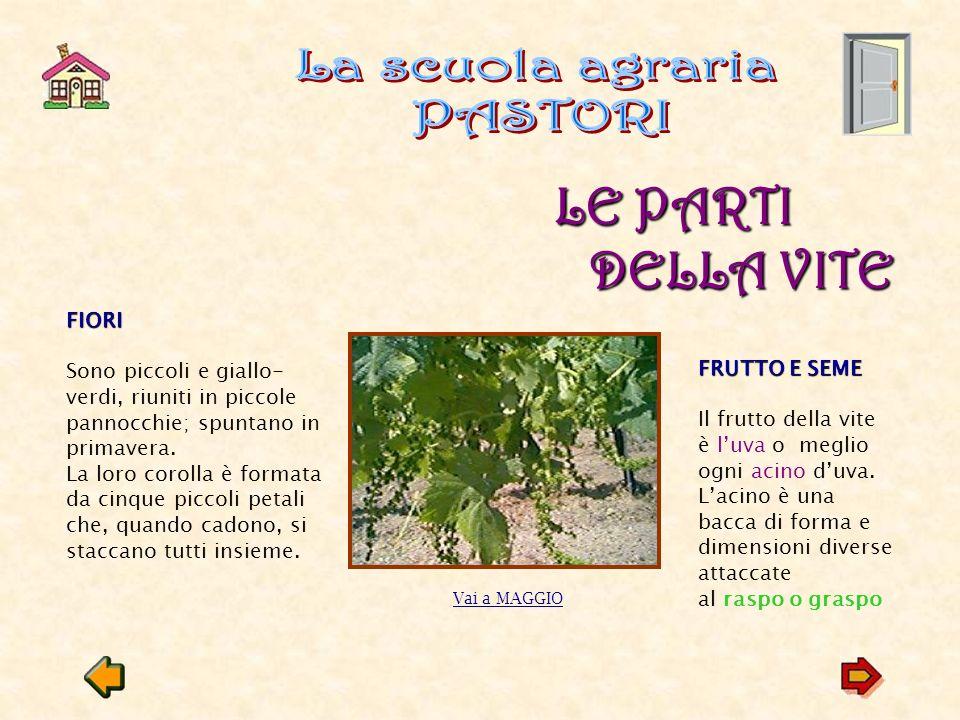 Tra Settembre e Ottobre si vendemmiano la maggioranza delle uvevendemmiano Tra Ottobre e Novembre si raccolgono le uve a maturazione tardiva e quelle che si lasciano appassire sulla pianta per produrre certi tipi di vino passito.