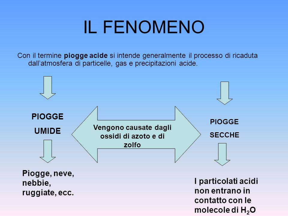 IL FENOMENO Con il termine piogge acide si intende generalmente il processo di ricaduta dallatmosfera di particelle, gas e precipitazioni acide. PIOGG