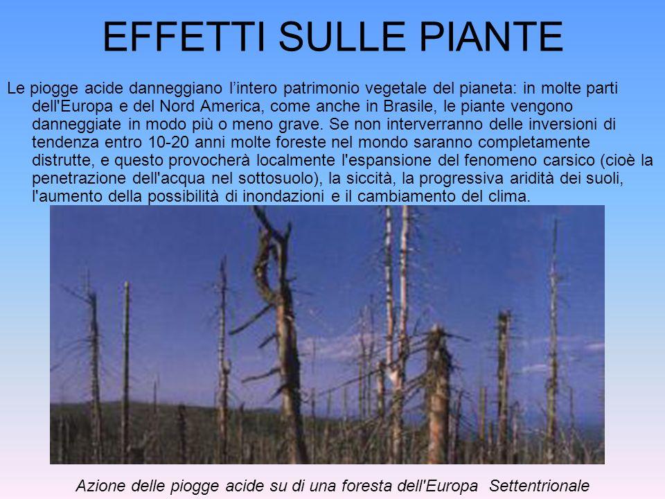 EFFETTI SULLE PIANTE Le piogge acide danneggiano lintero patrimonio vegetale del pianeta: in molte parti dell'Europa e del Nord America, come anche in