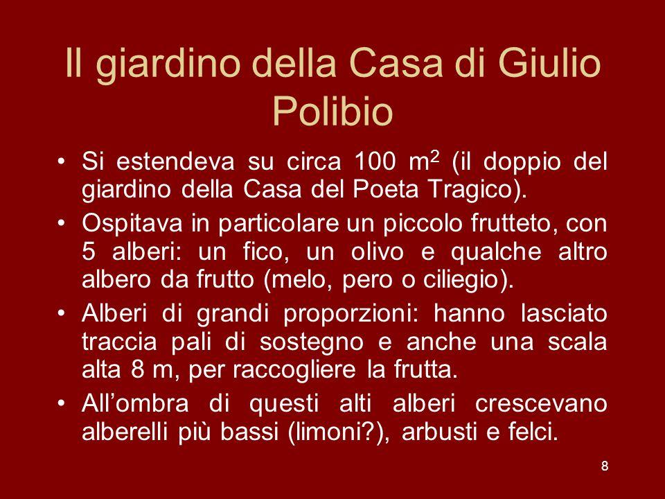 8 Il giardino della Casa di Giulio Polibio Si estendeva su circa 100 m 2 (il doppio del giardino della Casa del Poeta Tragico). Ospitava in particolar