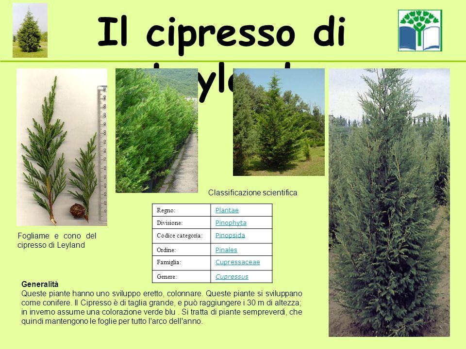 Il cipresso di Leyland Fogliame e cono del cipresso di Leyland Regno: Plantae Divisione: Pinophyta Codice categoria: Pinopsida Ordine: Pinales Famigli