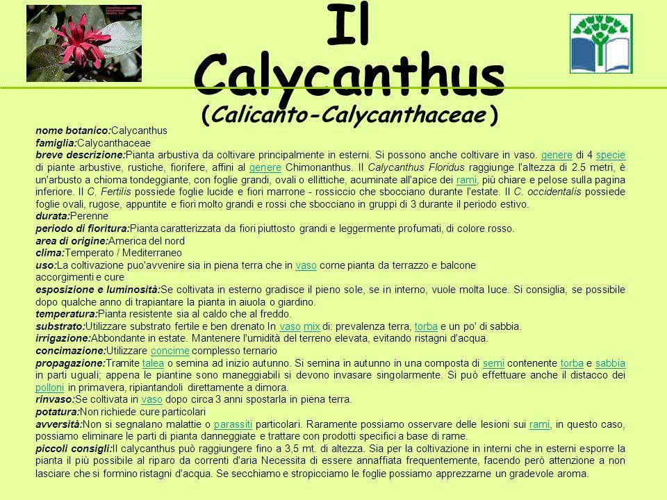 Il Calycanthus (Calicanto-Calycanthaceae ) nome botanico:Calycanthus famiglia:Calycanthaceae breve descrizione:Pianta arbustiva da coltivare principalmente in esterni.