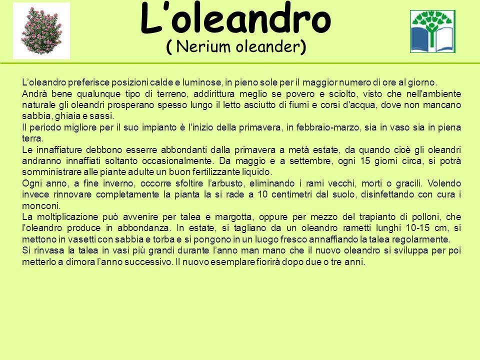 Loleandro ( Nerium oleander) Loleandro preferisce posizioni calde e luminose, in pieno sole per il maggior numero di ore al giorno.