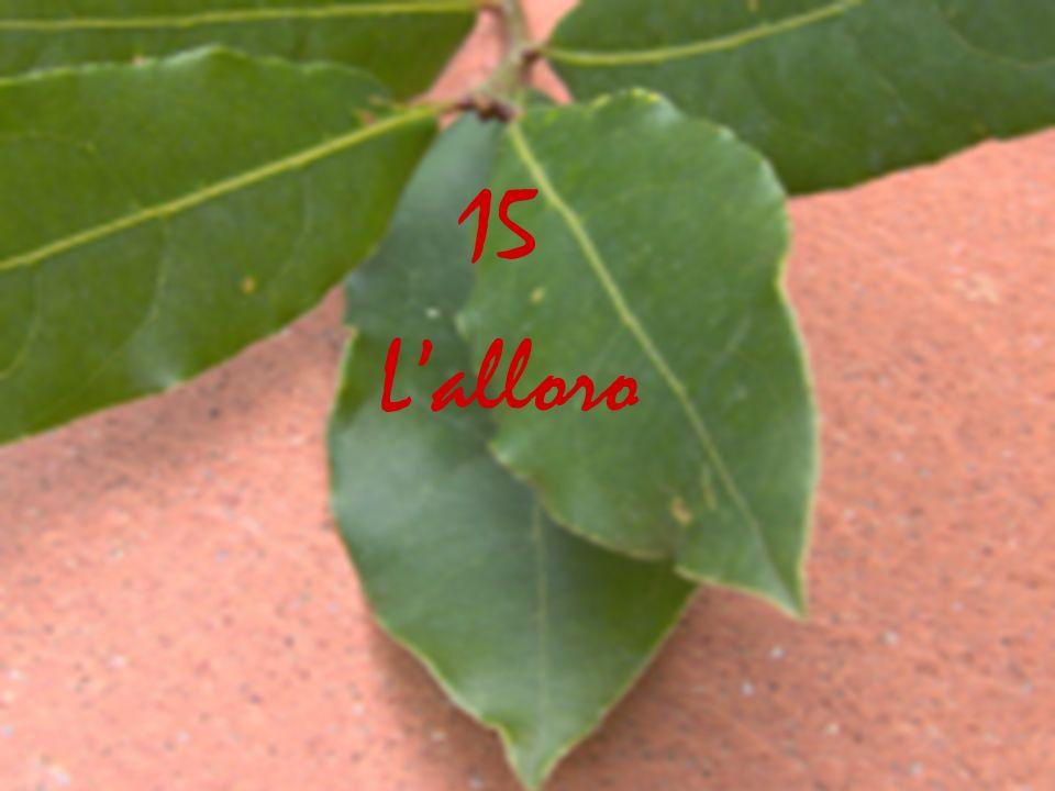 Lalloro 15