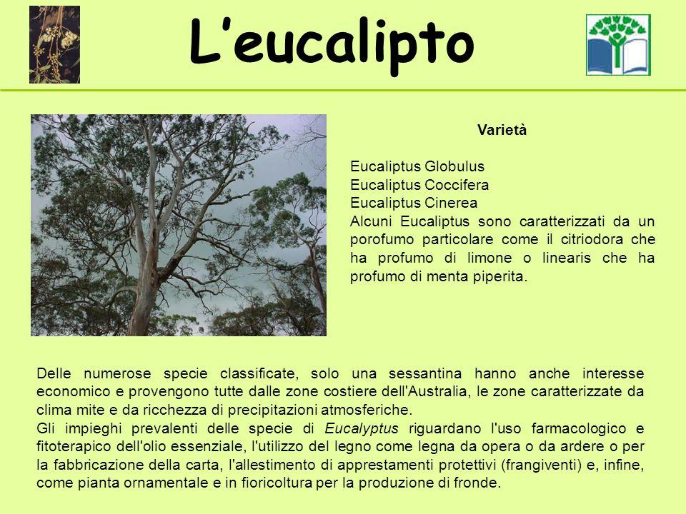 Leucalipto Delle numerose specie classificate, solo una sessantina hanno anche interesse economico e provengono tutte dalle zone costiere dell Australia, le zone caratterizzate da clima mite e da ricchezza di precipitazioni atmosferiche.