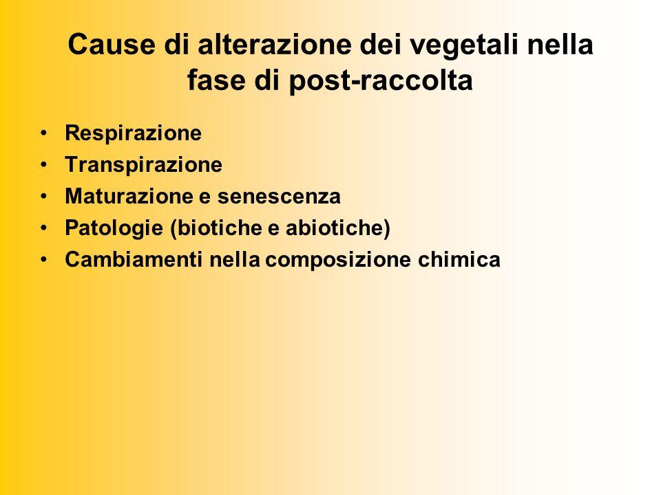Cause di alterazione dei vegetali nella fase di post-raccolta Respirazione Transpirazione Maturazione e senescenza Patologie (biotiche e abiotiche) Cambiamenti nella composizione chimica