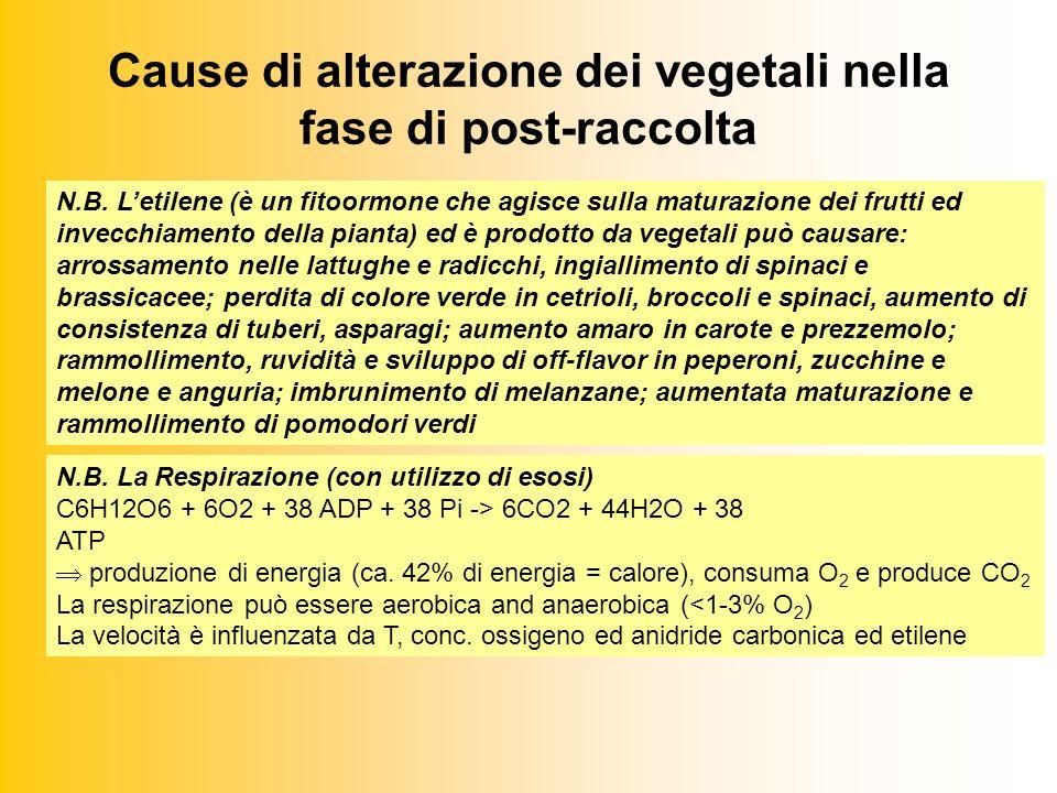 Cause di alterazione dei vegetali nella fase di post-raccolta N.B.