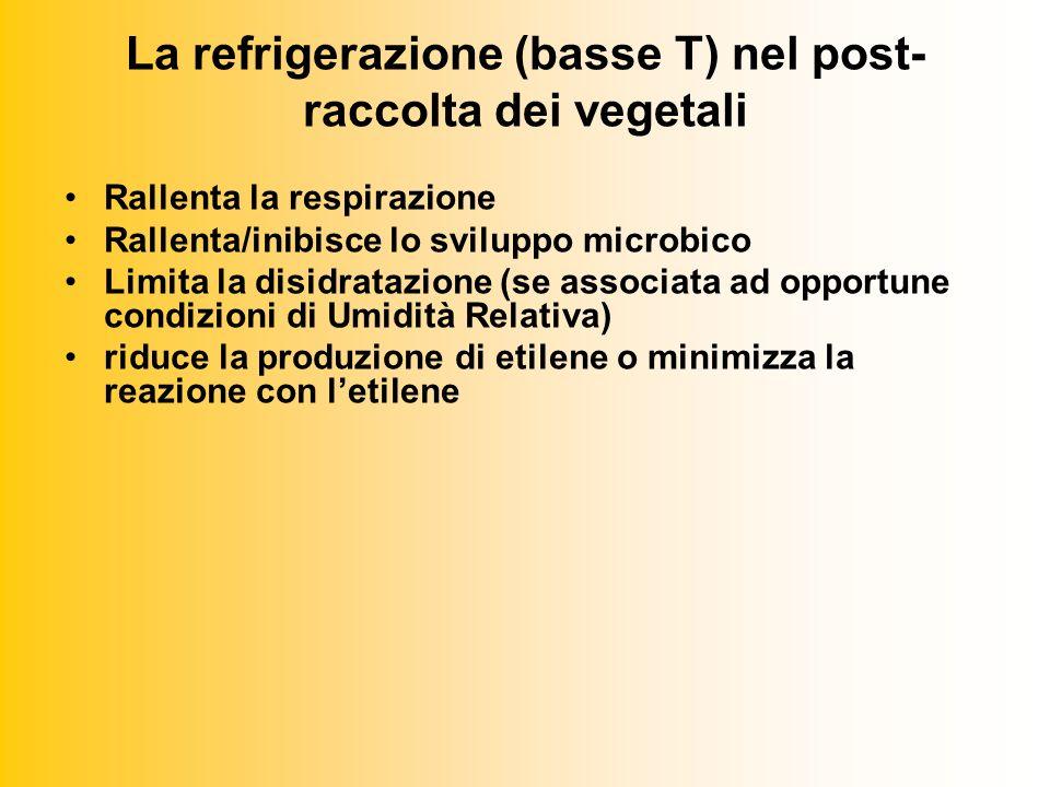 La refrigerazione (basse T) nel post- raccolta dei vegetali Rallenta la respirazione Rallenta/inibisce lo sviluppo microbico Limita la disidratazione (se associata ad opportune condizioni di Umidità Relativa) riduce la produzione di etilene o minimizza la reazione con letilene