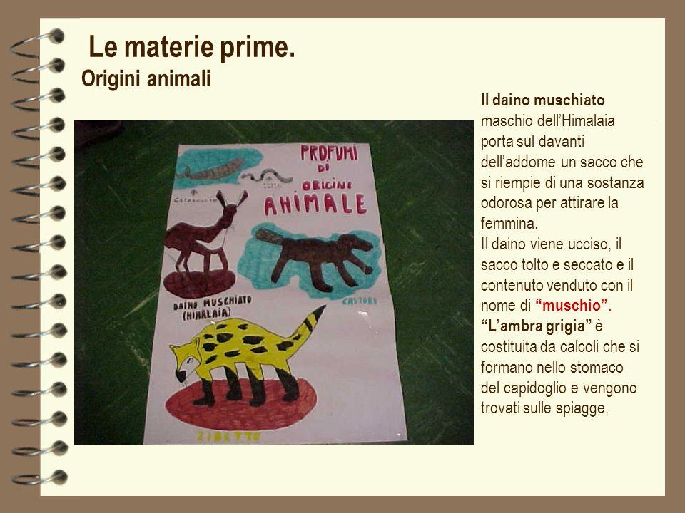Le materie prime. Origini animali Il daino muschiato maschio dellHimalaia porta sul davanti delladdome un sacco che si riempie di una sostanza odorosa