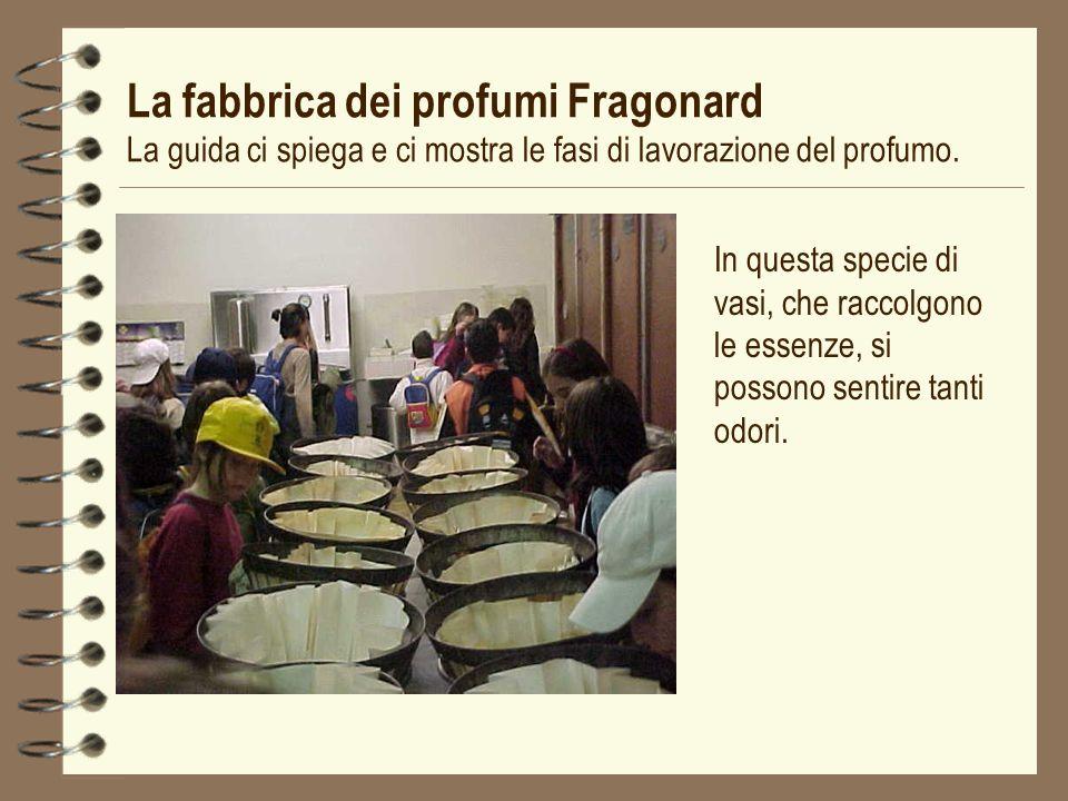 La fabbrica dei profumi Fragonard La guida ci spiega e ci mostra le fasi di lavorazione del profumo. In questa specie di vasi, che raccolgono le essen