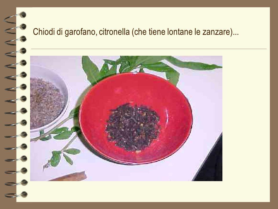 Chiodi di garofano, citronella (che tiene lontane le zanzare)...