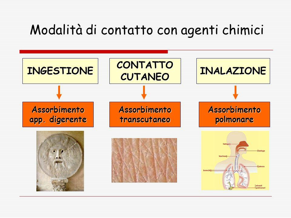 Modalità di contatto con agenti chimici INGESTIONE CONTATTO CUTANEO INALAZIONE Assorbimento app.