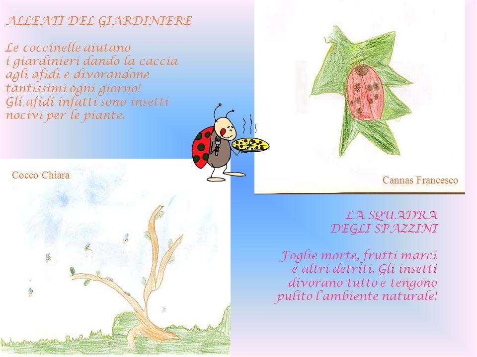 ALLEATI DEL GIARDINIERE Le coccinelle aiutano i giardinieri dando la caccia agli afidi e divorandone tantissimi ogni giorno! Gli afidi infatti sono in