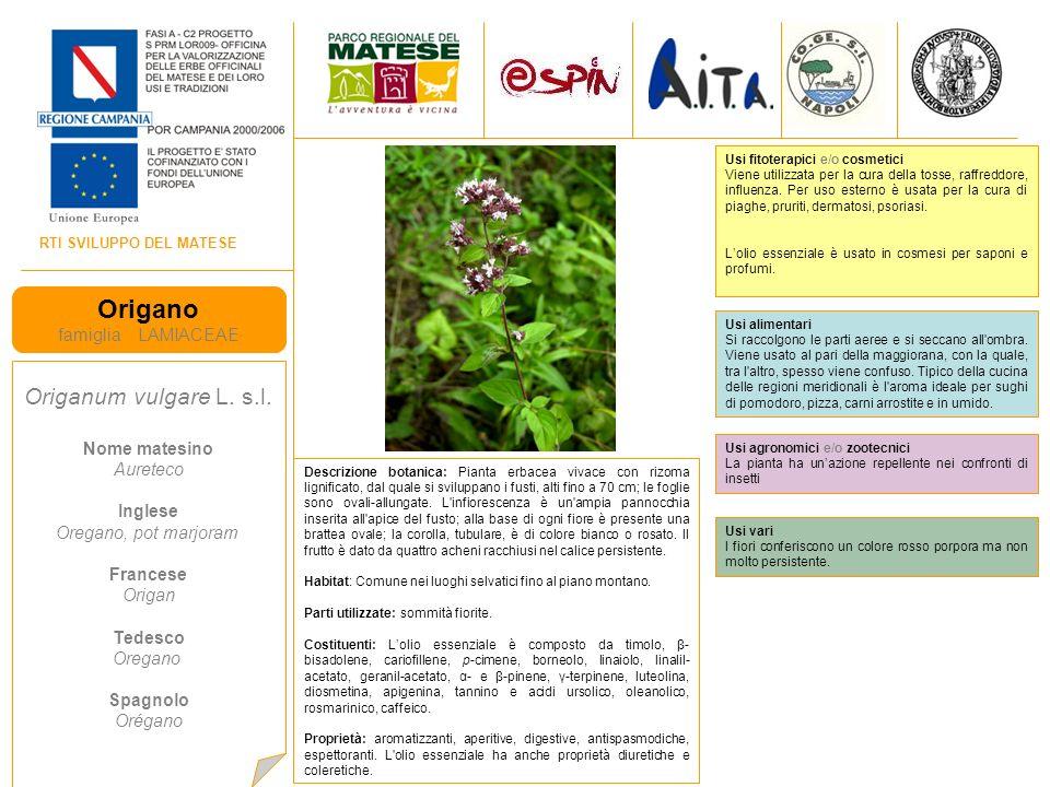 RTI SVILUPPO DEL MATESE Origano famiglia LAMIACEAE Origanum vulgare L.