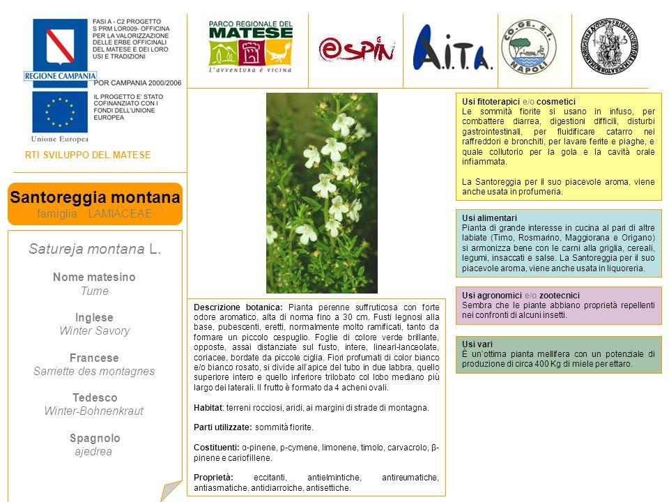 RTI SVILUPPO DEL MATESE Santoreggia montana famiglia LAMIACEAE Satureja montana L.