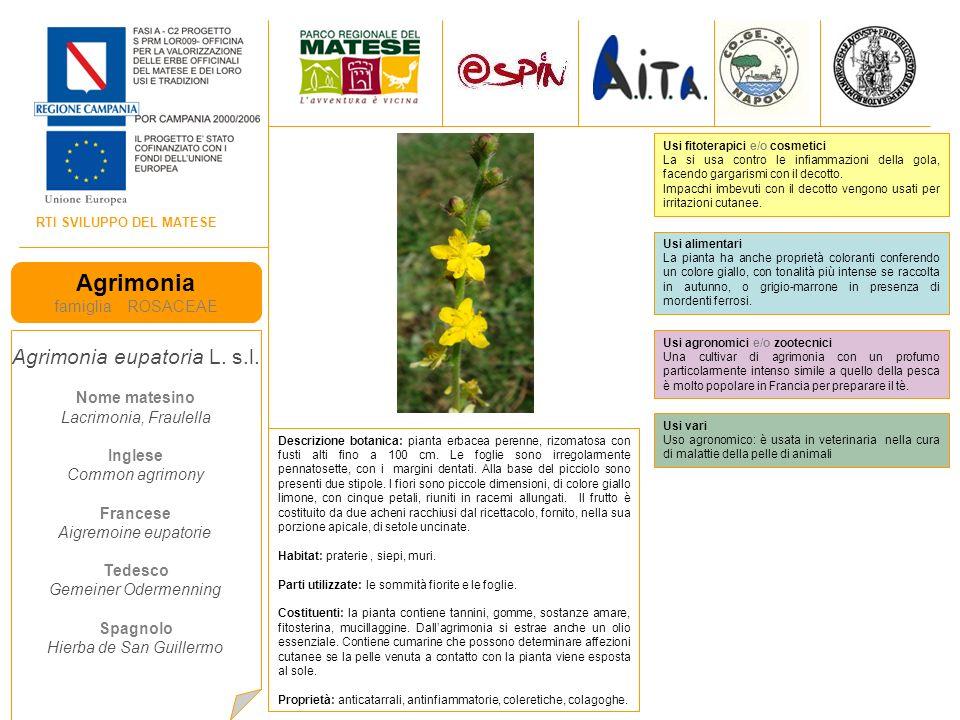 RTI SVILUPPO DEL MATESE Agrimonia famiglia ROSACEAE Agrimonia eupatoria L. s.l. Nome matesino Lacrimonia, Fraulella Inglese Common agrimony Francese A