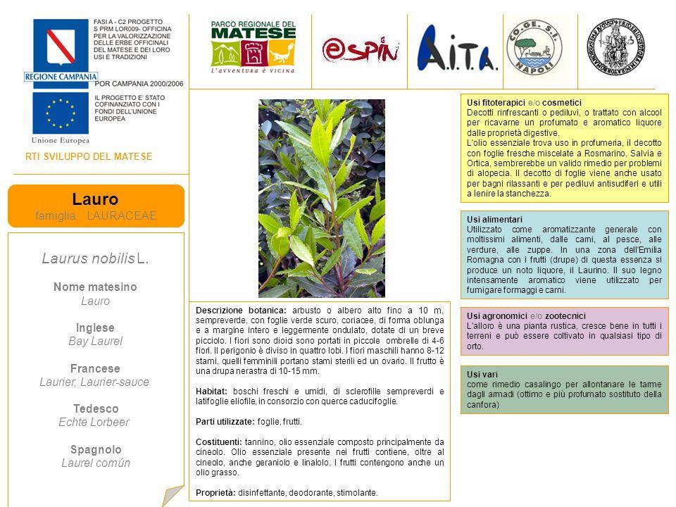 RTI SVILUPPO DEL MATESE Lauro famiglia LAURACEAE Laurus nobilis L.