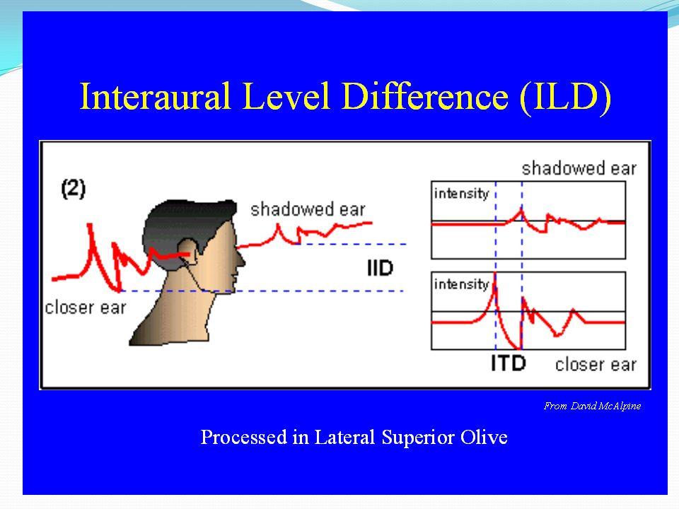 ITD I neuroni di dx saranno ancorati alla fase dellonda sonora di dx Quelli di sx saranno ancorati alla fase dellonda sonora di sx I due ancoraggi all