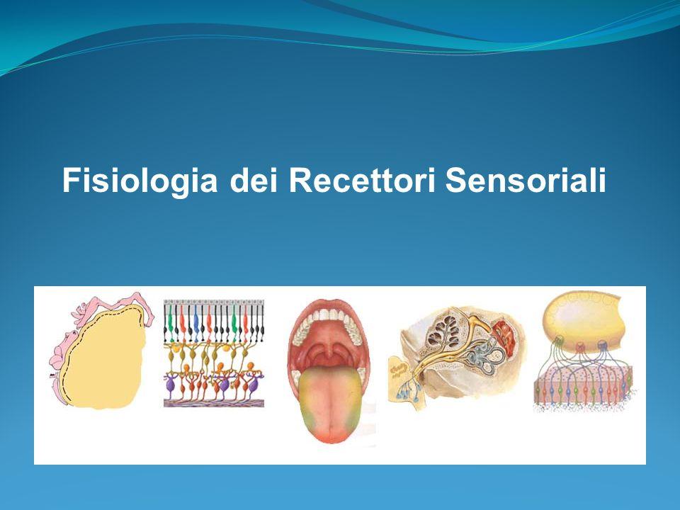 1. Canali semicircolari; 2. Gangli vestibolari superiore ed inferiore; 3. Nervo vestibolare; 4. Nervo facciale; 5. Nervo cocleare; 6. Chiocciola; 7. G