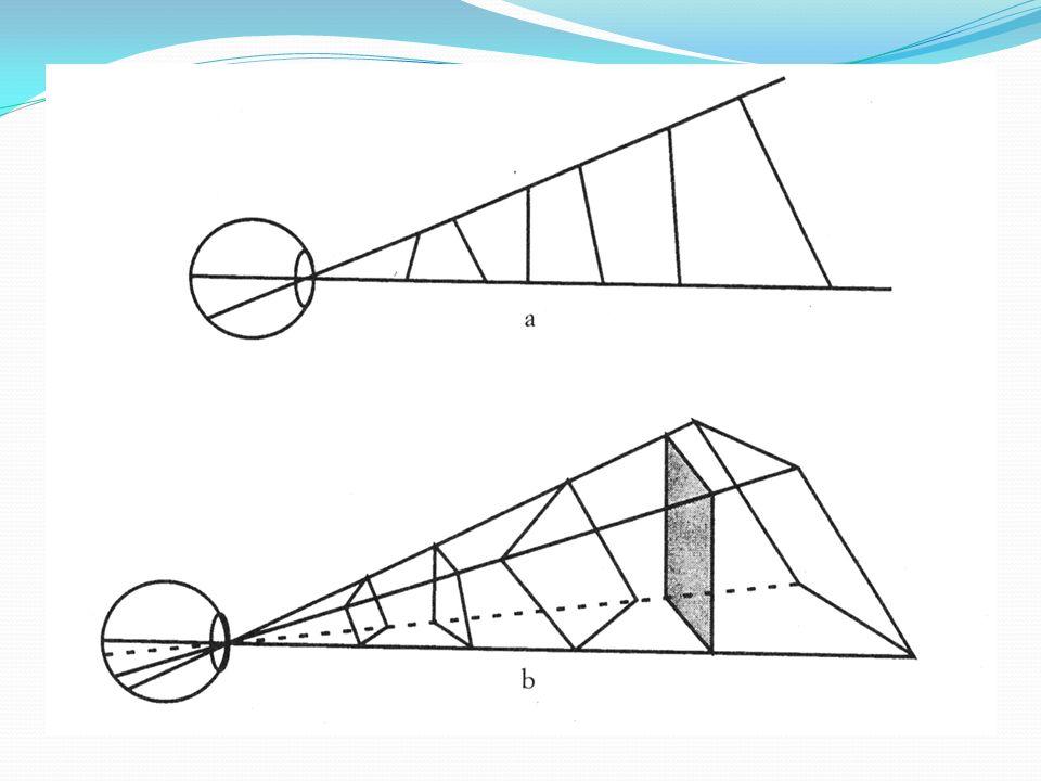Lindeterminazione ottica La stessa proiezione retinica può essere prodotta da un numero infinito di forme diverse, tutte sottese allo stesso angolo vi