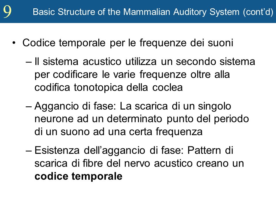 9 Basic Structure of the Mammalian Auditory System (contd) Codice temporale per le frequenze dei suoni –Il sistema acustico utilizza un secondo sistem