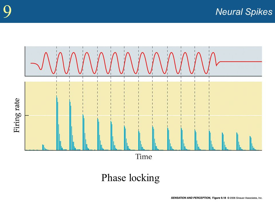 9 Neural Spikes Phase locking
