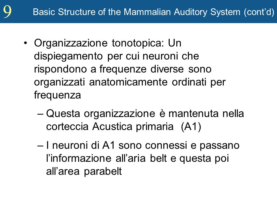 9 Basic Structure of the Mammalian Auditory System (contd) Organizzazione tonotopica: Un dispiegamento per cui neuroni che rispondono a frequenze dive