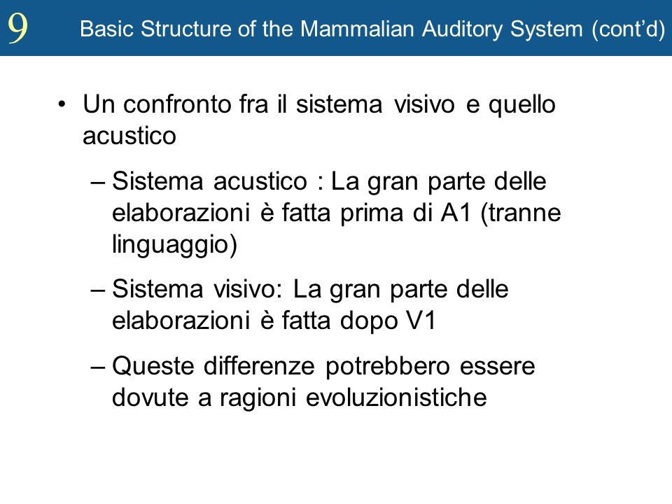 9 Basic Structure of the Mammalian Auditory System (contd) Un confronto fra il sistema visivo e quello acustico –Sistema acustico : La gran parte dell