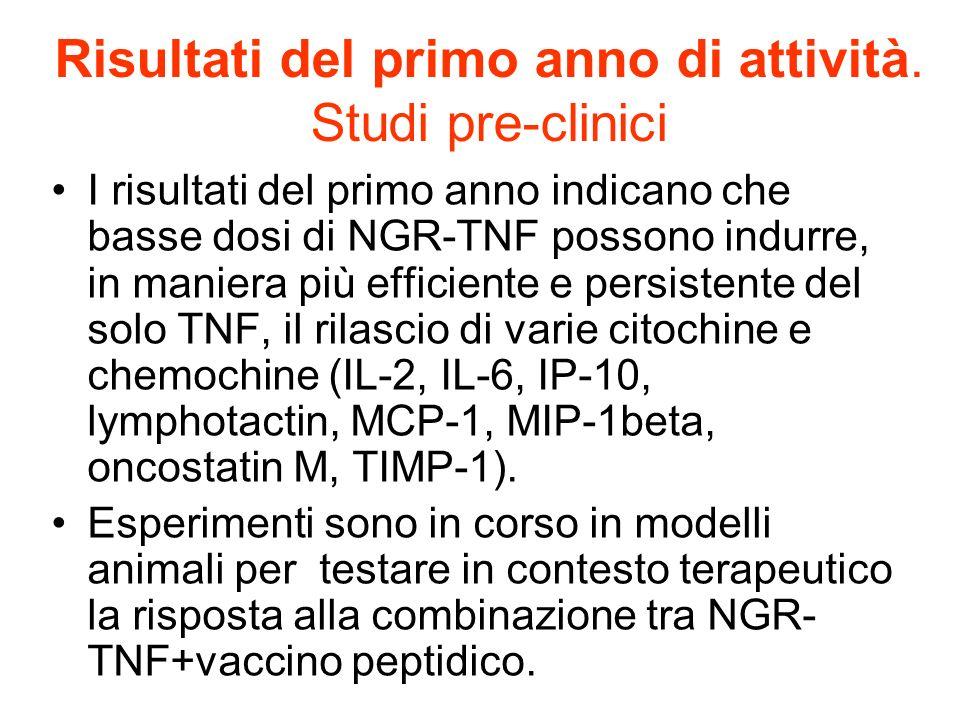 Risultati del primo anno di attività. Studi pre-clinici I risultati del primo anno indicano che basse dosi di NGR-TNF possono indurre, in maniera più