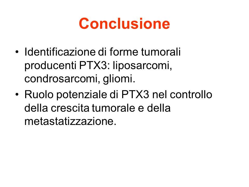 Conclusione Identificazione di forme tumorali producenti PTX3: liposarcomi, condrosarcomi, gliomi. Ruolo potenziale di PTX3 nel controllo della cresci