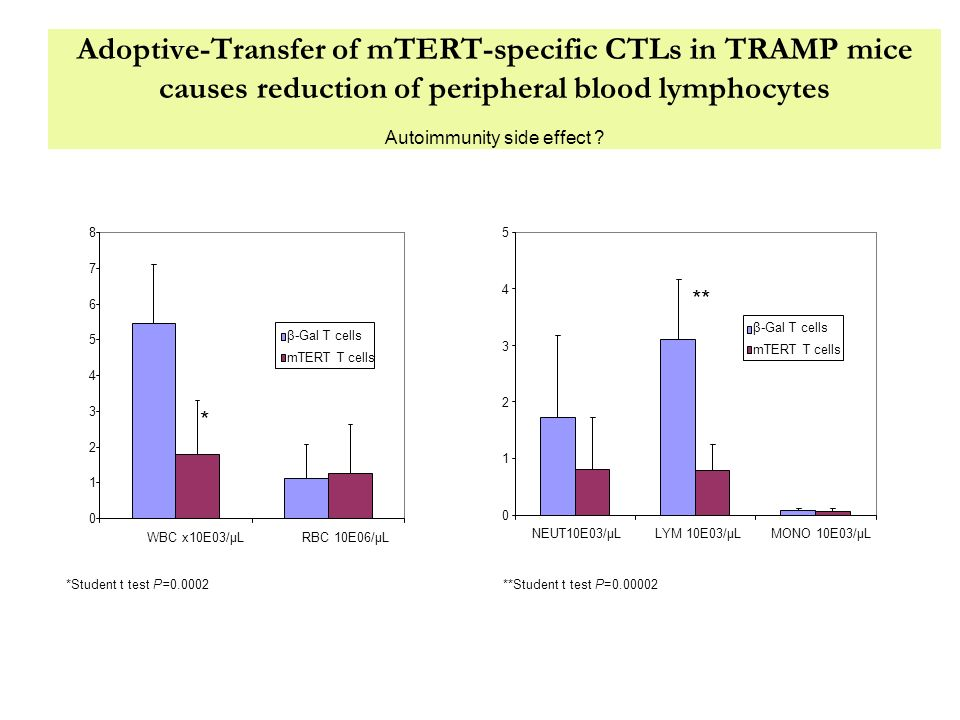 Adoptive-Transfer of mTERT-specific CTLs in TRAMP mice causes reduction of peripheral blood lymphocytes Autoimmunity side effect ? 0 1 2 3 4 5 6 7 8 W