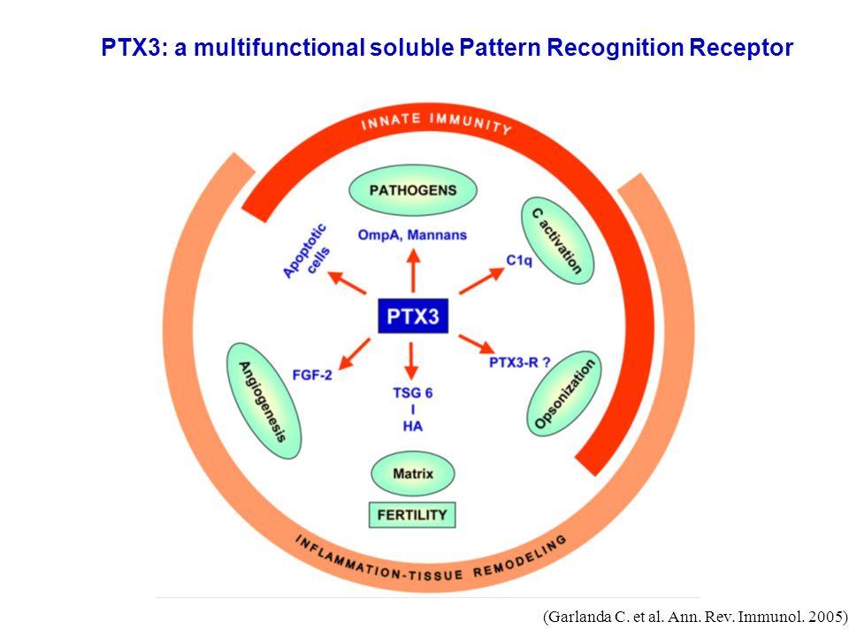 PTX3: a multifunctional soluble Pattern Recognition Receptor (Garlanda C. et al. Ann. Rev. Immunol. 2005)