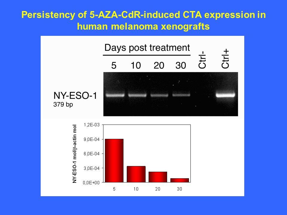 Persistency of 5-AZA-CdR-induced CTA expression in human melanoma xenografts NY-ESO-1 mol/ -actin mol