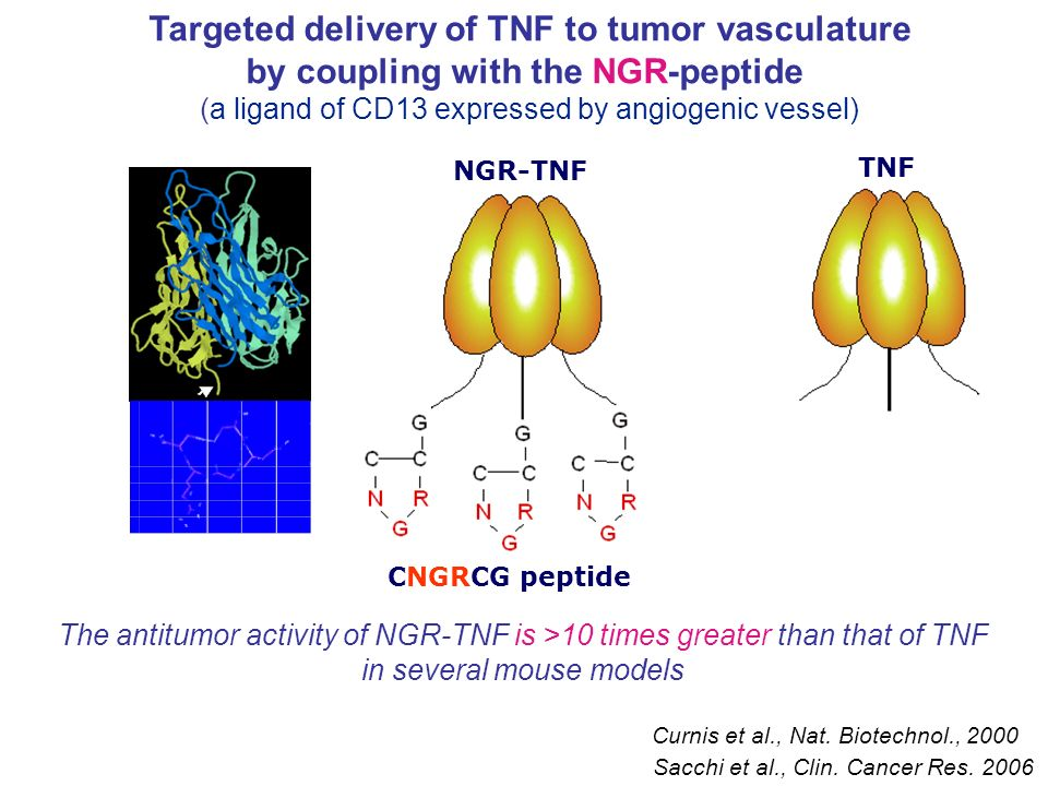 INT-001 INT-004 Ex vivo recognition of Mart-1 peptide (by IFNγ ELISpot) and Treg frequency in vaccinated melanoma patients