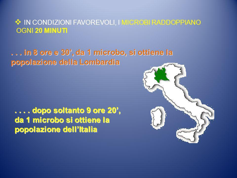 IN CONDIZIONI FAVOREVOLI, I MICROBI RADDOPPIANO OGNI 20 MINUTI... in 8 ore e 30,da 1 microbo, si ottiene la popolazione della Lombardia... in 8 ore e