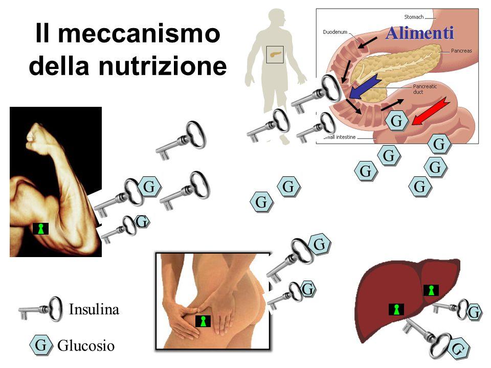 G G G G G G G G G G G G G G G G G G G G G G G G Alimenti Il meccanismo della nutrizione Insulina G G Glucosio G G G G