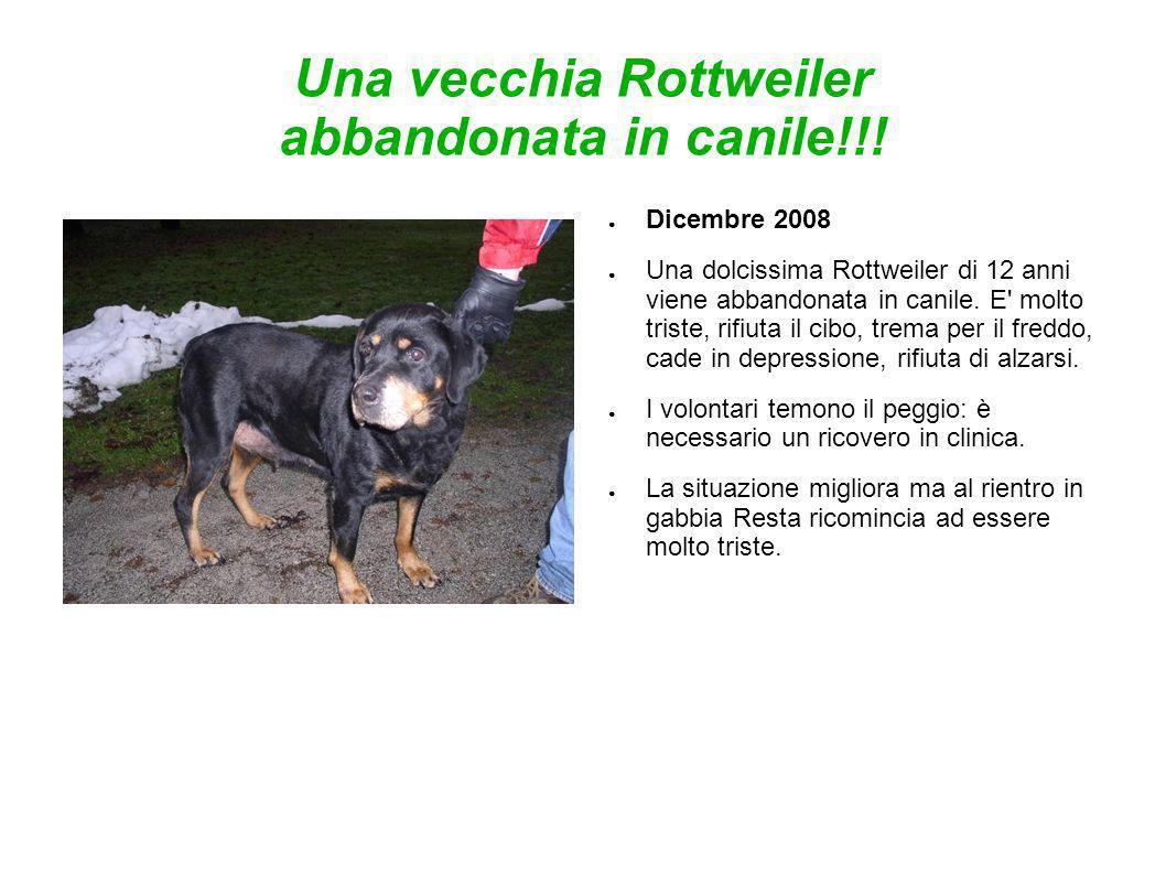 Una vecchia Rottweiler abbandonata in canile!!! Dicembre 2008 Una dolcissima Rottweiler di 12 anni viene abbandonata in canile. E' molto triste, rifiu