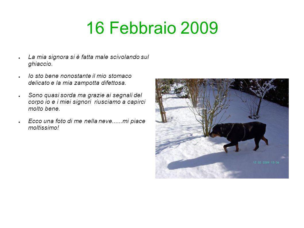 16 Febbraio 2009 La mia signora si è fatta male scivolando sul ghiaccio. Io sto bene nonostante il mio stomaco delicato e la mia zampotta difettosa. S
