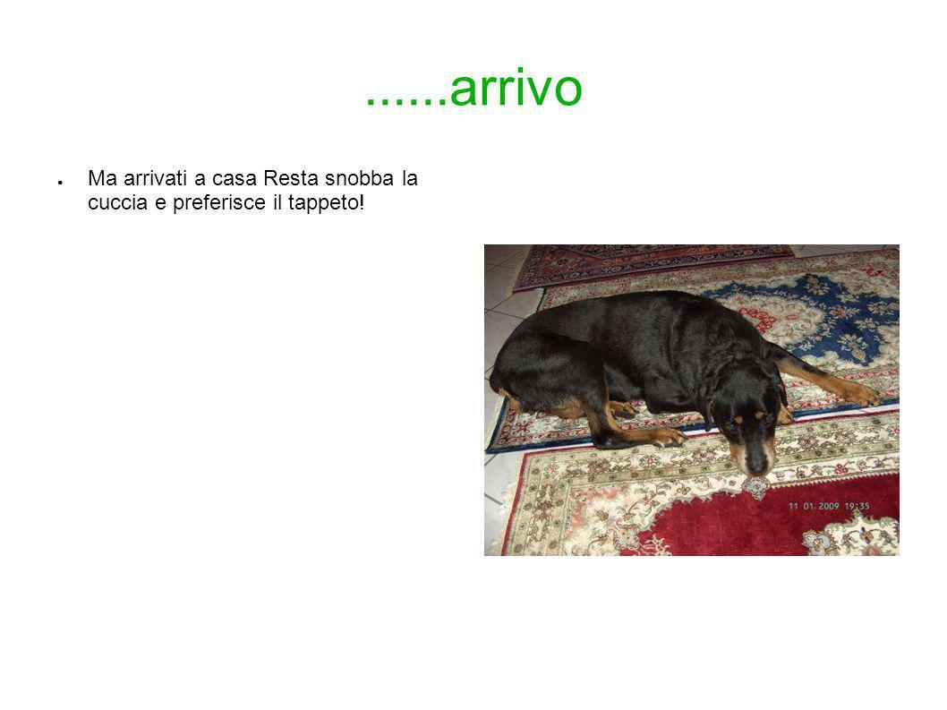 13 Gennaio 2009 Ciao, eccomi.....sono arrivata domenica e mi sono ambientata subito molto bene.