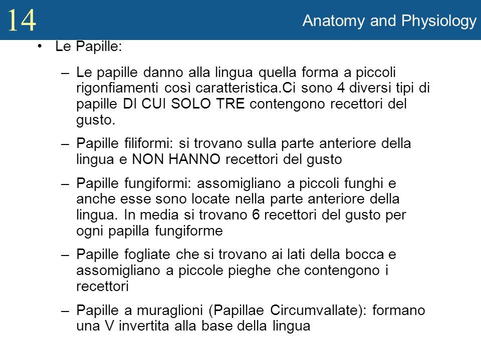 14 Anatomy and Physiology Le Papille: –Le papille danno alla lingua quella forma a piccoli rigonfiamenti così caratteristica.Ci sono 4 diversi tipi di