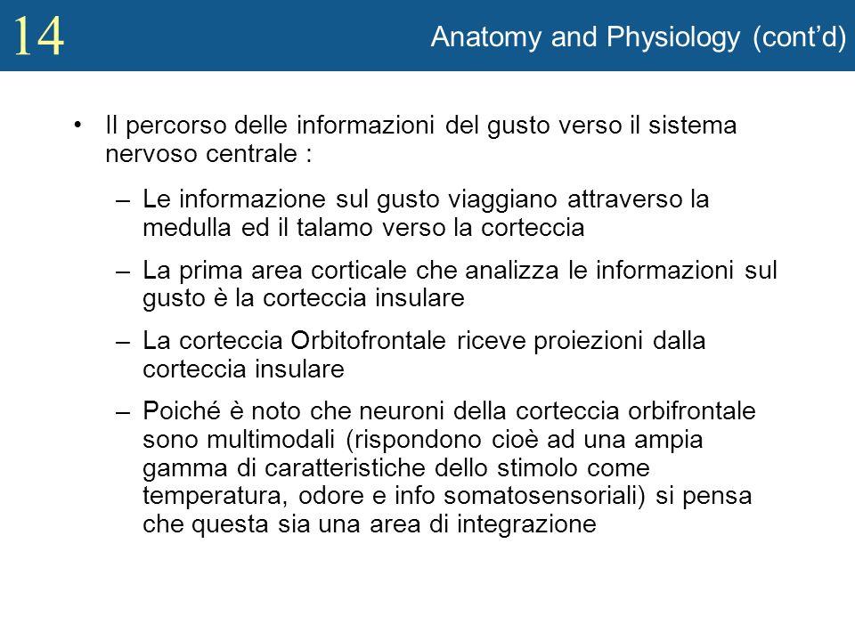 14 Anatomy and Physiology (contd) Il percorso delle informazioni del gusto verso il sistema nervoso centrale : –Le informazione sul gusto viaggiano at