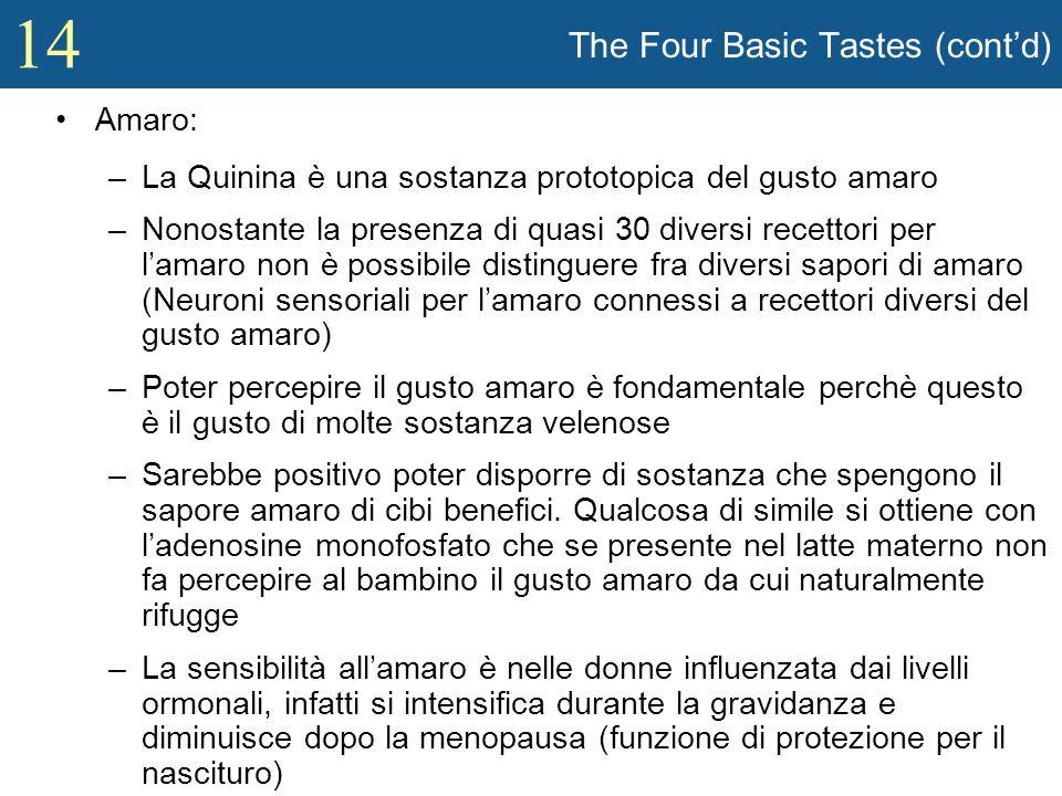 14 The Four Basic Tastes (contd) Amaro: –La Quinina è una sostanza prototopica del gusto amaro –Nonostante la presenza di quasi 30 diversi recettori p