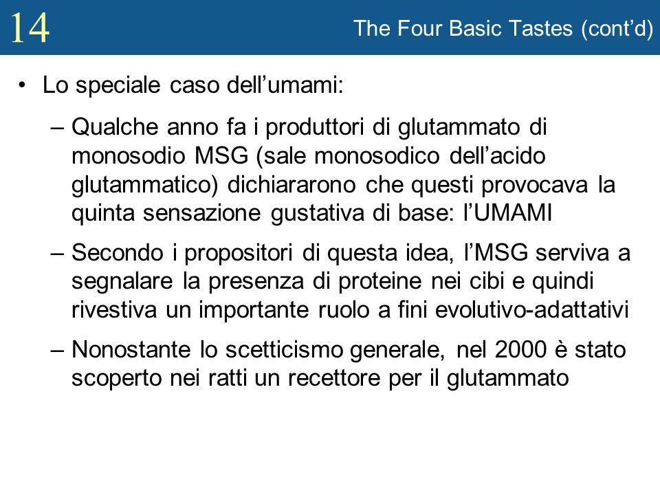14 The Four Basic Tastes (contd) Lo speciale caso dellumami: –Qualche anno fa i produttori di glutammato di monosodio MSG (sale monosodico dellacido g