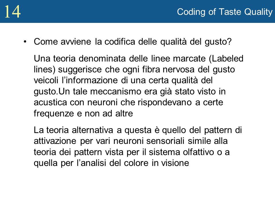 14 Coding of Taste Quality Come avviene la codifica delle qualità del gusto? Una teoria denominata delle linee marcate (Labeled lines) suggerisce che