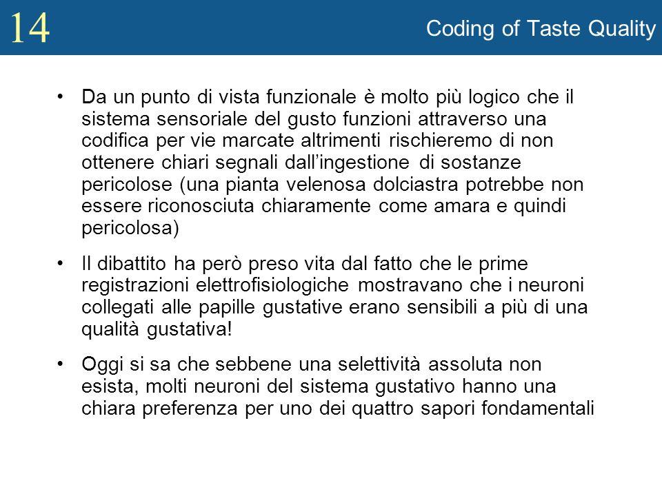 14 Coding of Taste Quality Da un punto di vista funzionale è molto più logico che il sistema sensoriale del gusto funzioni attraverso una codifica per