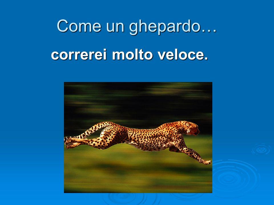 Come un ghepardo… correrei molto veloce.