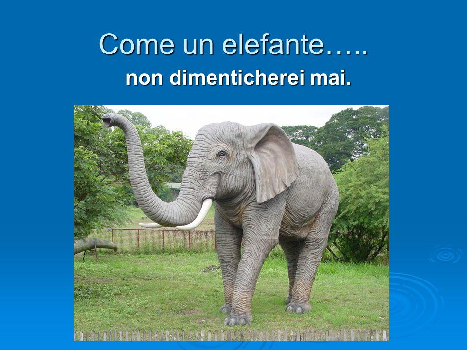 Come un elefante….. non dimenticherei mai.